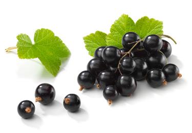 do.php?imgf=13353689631 درمان بیماری کاسکو و طوطی با آب میوه