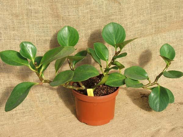 گیاهان مناسب برای تراریومموضوع: گیاهان مناسب برای تراریوم